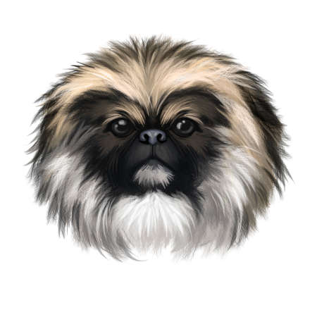 Chinese Imperial Dog dog breed isolated on white background digital art illustration. Cute pet hand drawn portrait. Graphic clipart design realistic animal Zdjęcie Seryjne