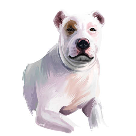 Bully Kutta dog breed isolated on white background digital art illustration. Bully Kutta or Pakistani Mastiff or Indian Mastiff dog breed that originates from the erstwhile Punjab and Sindh, cute pet Zdjęcie Seryjne