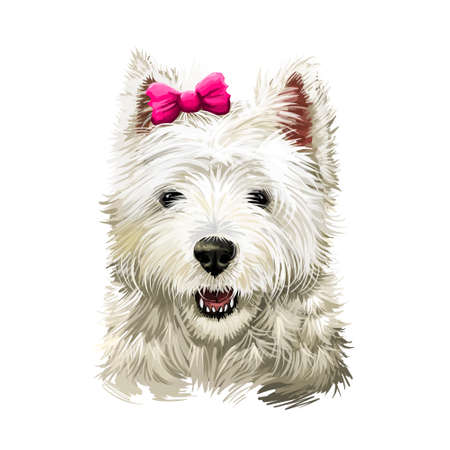 Cairn Terrier dog breed isolated on white digital art illustration. Old terrier breeds, originating in the Scottish Highlands, working dogs. Cairn function was to hunt and chase quarry between cairns