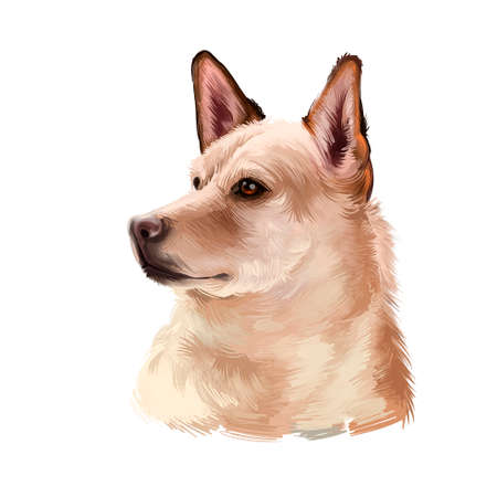 Canaan dog breed isolated on white background digital art illustration. Breed of pariah dog has been in existence in Middle East. Cute pet hand drawn portrait. Graphic clipart design realistic animal
