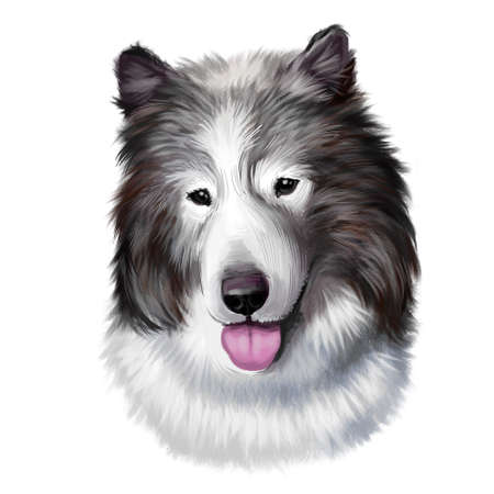 Canadian Eskimo dog breed isolated on white background digital art. Arctic breed of working dog, domestic canine qimmiq or qimmit. Cute pet hand drawn portrait. Graphic clipart design realistic animal Zdjęcie Seryjne