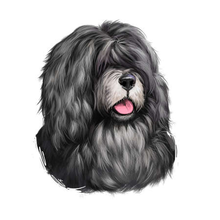 Cao da Serra de Aires dog breed isolated on white background digital art illustration. Medium-sized breed of dog of herding type. Cute pet hand drawn portrait. Graphic clipart design realistic animal Stock Photo