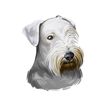 Cesky Terrier dog breed isolated on white background digital art illustration. Cute pet hand drawn portrait. Graphic clipart design realistic animal