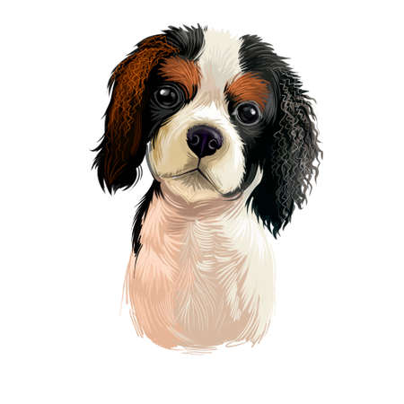 Cavalier King Charles Spaniel dog breed isolated on white background digital art illustration. Cute pet hand drawn portrait. Graphic clipart design realistic animal