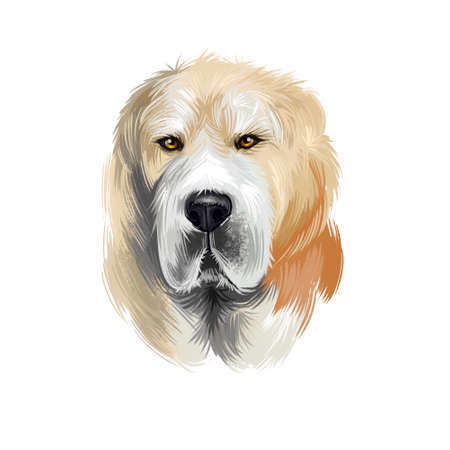 Central Asian Shepherd Dog breed isolated on white background digital art illustration. Cute pet hand drawn portrait. Graphic clipart design realistic animal
