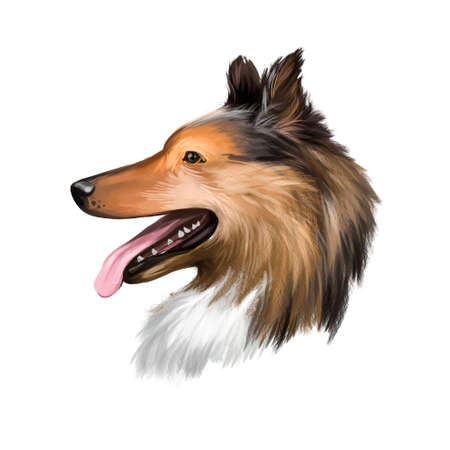 Collie, Rough dog breed isolated on white background digital art illustration. Cute pet hand drawn portrait. Graphic clipart design realistic animal
