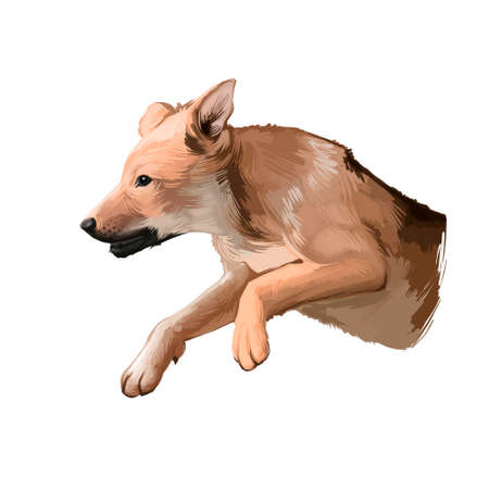 Carolina Puppy dog breed isolated on white background digital art illustration. Carolina dog landrace of medium-sized, feral dog. Cute pet hand drawn portrait. Graphic clipart design realistic animal