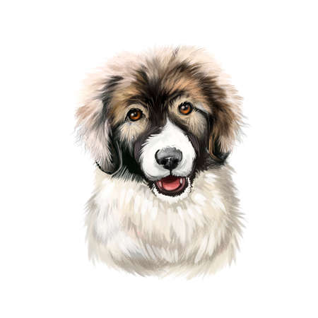 Carpathian Shepherd puppy dog breed isolated on white digital art. Breed of large sheep dog originated in Carpathian Mountains. Cute pet hand drawn portrait. Graphic clipart design realistic animal