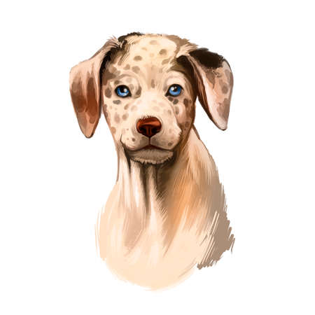 Catahoula Leopard dog breed isolated on white digital art illustration. Catahoula Cur American dog breed, Leopard Dog Louisiana. Cute pet hand drawn portrait. Graphic clipart design realistic animal Zdjęcie Seryjne