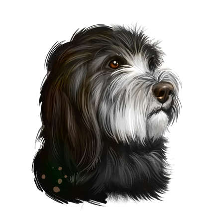 Catalan Sheepdog dog breed isolated on white background digital art illustration. Breed of Catalan Pyrenean dog used as sheepdog. Cute pet hand drawn portrait. Graphic clipart design realistic animal Zdjęcie Seryjne