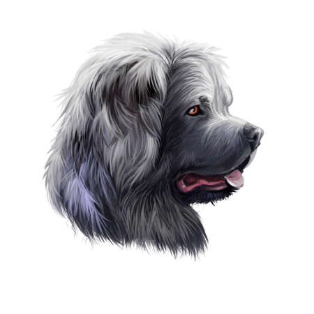 Caucasian Shepherd Dog breed isolated on white background digital art illustration. Cute pet hand drawn portrait. Graphic clipart design realistic animal Zdjęcie Seryjne
