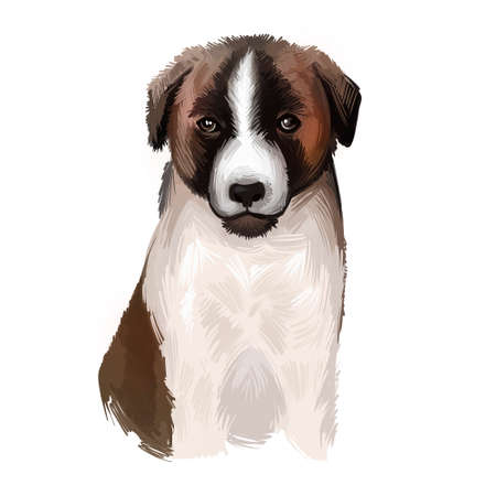 Cao de Gado Transmontano Puppy dog breed isolated on white digital art illustration. Transmontano Mastiff or Transmontano Cattle Dog rare molosser working giant dog breed. Cute pet hand drawn portrait