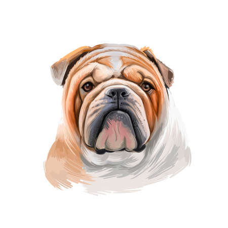 Bulldog dog breed isolated on white background digital art illustration. Medium-sized breed of dog English Bulldog or British Bulldog muscular, hefty dog with wrinkled face, distinctive pushed-in nose Zdjęcie Seryjne