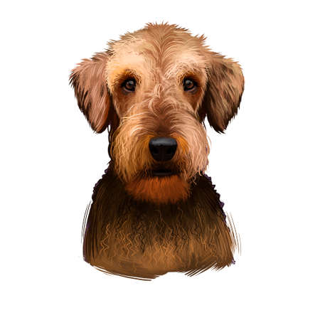 Airedale Terrier breed digital art illustration isolated on white background. Cute domestic purebred animal. Bingley and Waterside Terrier medium-length coat with harsh topcoat and soft undercoat. Stock fotó