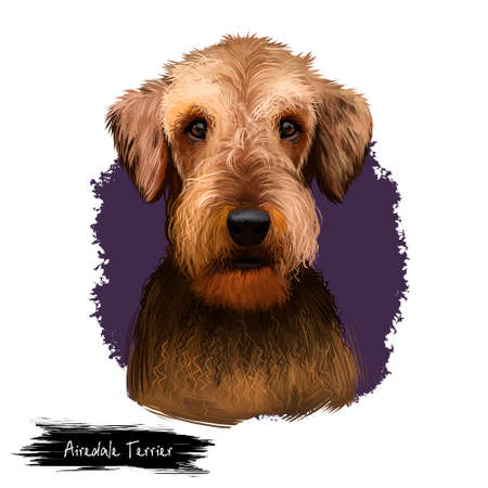 Airedale Terrier breed digital art illustration isolated on white background. Cute domestic purebred animal. Bingley and Waterside Terrier medium-length coat with harsh topcoat and soft undercoat. Stock Photo