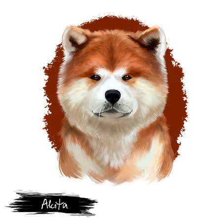 Akita breed digital art illustration isolated on white background. Cute domestic purebred animal. Large breed of dog American Akita Inu with short double-coat, powerful, independent and dominant breed 写真素材