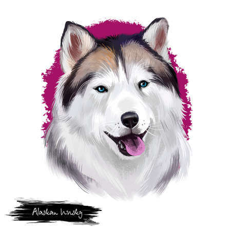 Alaskan husky breed digital art illustration isolated on white background. Cute domestic purebred animal. Malamute purebred portrait with north wolf wide open mouth, arctic dog with long fur