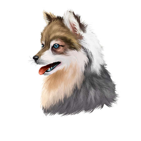 Alaskan Klee Kai dog breed digital art illustration isolated. Cute domestic purebred animal. Portrait of alaskan pedigree, profile view of long haired doggy purebred print. Spitz-type breed Malamute