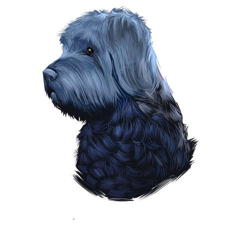 Bouvier des Flandres dog breed isolated on white background digital art illustration, herding dog breed rough-coated dog of rugged appearance, profile view of black carnivora domestic pet animal. Фото со стока
