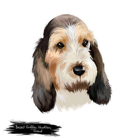 Grand Basset Griffon Vendeen or GBGV short legged hound type French dog breed digital art illustration isolated on white background. Cute pet hand drawn portrait. Graphic clip art design. Фото со стока