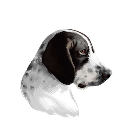 Braque dAuvergne dog breed isolated on white background digital art illustration. Type of hunting dog profile view, short, glossy coat is white with mottling of black, hand drawn domestic puppy pet Zdjęcie Seryjne