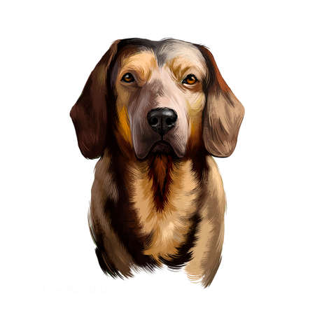 Alpine Dachsbracke dog digital art illustration isolated on white background. Small breed of dog of the scent hound type originating in Austria. Bred to track animals. Slight resemblance to Dachshund Stock fotó