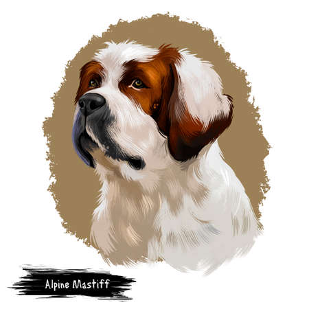 Alpine Mastiff dog digital art illustration isolated on white background. Extinct Molosser dog breed of gigantic size, dog with brown and white fur coat, portrait of cute pedigree canine animal