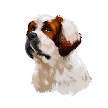 Alpine Mastiff dog digital art illustration isolated on white background. Extinct Molosser dog breed of gigantic size, dog with brown and white fur coat, portrait of cute pedigree canine animal