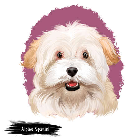 Alpine Spaniel dog digital art illustration isolated on white background. Spaniel large dog notable for its thick curly coat, curlier than that of the English Cocker Spaniel, cute white dog head Stock fotó