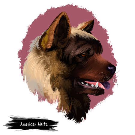 American Akita dog digital art illustration isolated on white background. Large breed of dog originating from Japan. Akita Ken Inu short double-coat similar to that of many other northern spitz breeds 스톡 콘텐츠