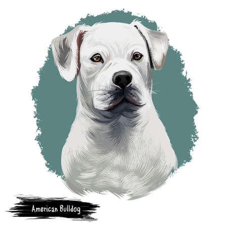 American Bulldog puppy digital art illustration isolated on white background. American Bulldog, Standard and Classic breed of utility dog. Stocky strong-looking dog, with large head and muscular build