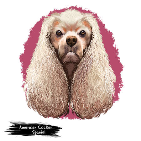American Cocker Spaniel dog digital art illustration isolated on white background. Breed of sporting dog with medium long silky fur on the body and ears closely related to the English Cocker Spaniel Banco de Imagens