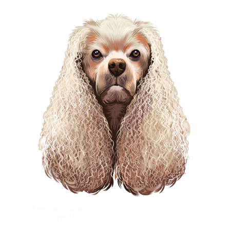 American Cocker Spaniel dog digital art illustration isolated on white background. Breed of sporting dog with medium long silky fur on the body and ears closely related to the English Cocker Spaniel Stock fotó