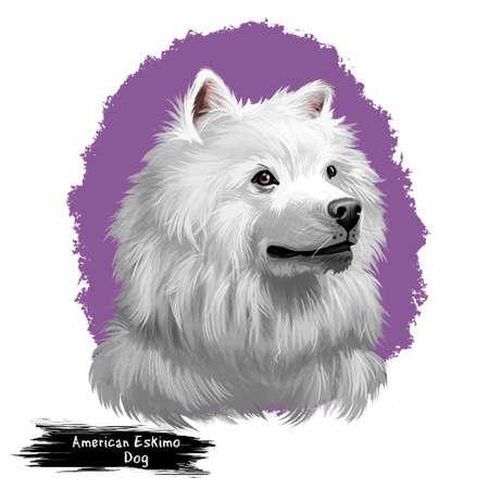 American Eskimo Dog digital art illustration isolated on white. Eskimo Spitz German Spitz. Eskie of miniature size. Breed of companion dog, Germany. T-shirt print, puppy food cover, hand drawn muzzle