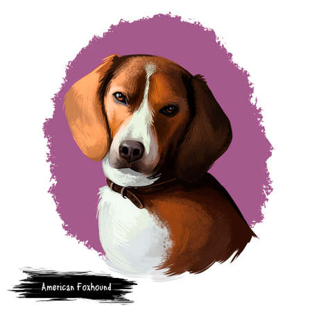 American Foxhound dog digital art illustration isolated on white. Breed of dog English hound bred to hunt foxes scent. Hazel or brown puppy. T-shirt print, puppy food cover, hand drawn muzzle portrait