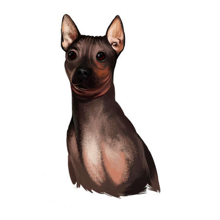 American Hairless Terrier AHT dog digital art illustration isolated on white background. Rare breed of dog variant of Rat Terrier. T-shirt print, puppy food cover, hand drawn muzzle portrait Stock Photo