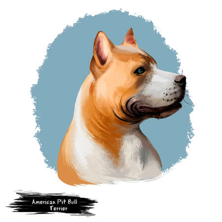 American Pit Bull Terrier dog digital art illustration isolated on white. Medium-sized, solidly-built, intelligent, short-haired dog. English Staffordshire Bull Terrier. Pit Bull illustration Stock Photo