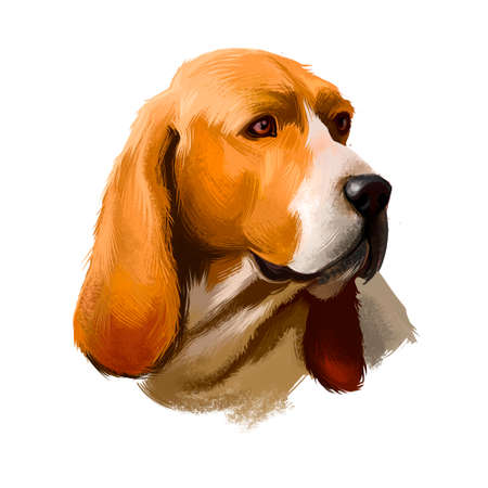 Artois Hound dog digital art illustration isolated on white background. Artois Hound is a rare breed of dog, and a descendant of the Bloodhound. Well constructed dog portrait with place for text