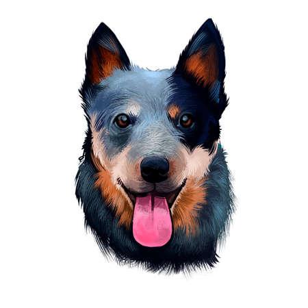 Australian Cattle Dog digital art illustration isolated on white. Cattle Dog breed of herding dog originally developed in Australia for driving cattle over long distances. Portrait head with text Stock Illustration - 130711354