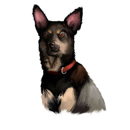 Australian Kelpie dog digital art illustration isolated on white. Australian Kelpie, or simply Kelpie, is an Australian sheep dog successful at mustering and droving head portrait with text