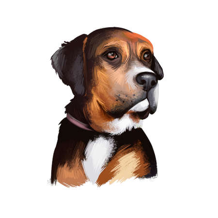 Austrian Black and Tan Hound dog breed digital art illustration isolated on white. Austrian Black and Tan Hound is a breed of dog originating in Austria. Black color dog white collar, head portrait