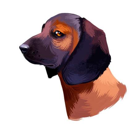Bavarian Mountain Hound dog digital art illustration isolated on white background. German origin scenthound breed dog. cross between Bavarian and Hanover Hound. Pet hand drawn portrait. Graphic design