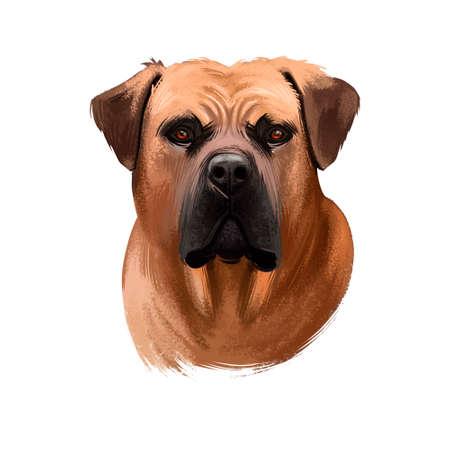 Boerboel, South African Mastiff dog digital art illustration isolated on white background. South Africa origin working farm dog, guardian dog. Cute pet hand drawn portrait. Graphic clip art design Stock Photo
