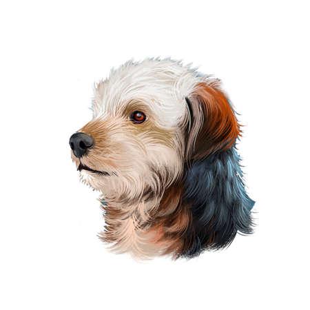 Bosnian Coarse-haired Hound, Barak dog digital art illustration isolated on white background. Bosnia and Herzegovina origin hunting dog. Pet hand drawn portrait. Graphic clip art design for web, print