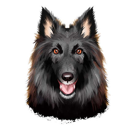 Groenendael shepherd, Belgian Sheepdog, Belgian Groenendael dog digital art illustration isolated on white background. Belgian origin herding dog. Cute pet hand drawn portrait. Graphic clip art design Stock Illustration - 130837418