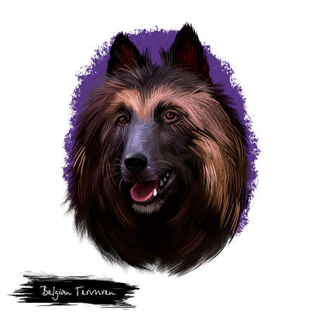 Belgian Tervuren or Belgian Shepherd Dog herding breed dog digital art illustration isolated on white background. Belgian origin working dog. Cute pet hand drawn portrait. Graphic clip art design.