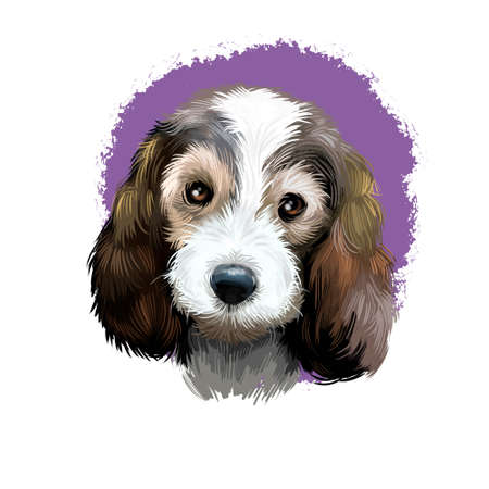 Petit Basset Griffon Vend en or PBGV short-legged hound type French dog breed digital art illustration isolated on white background. Cute pet hand drawn portrait. Graphic clip art design. Фото со стока