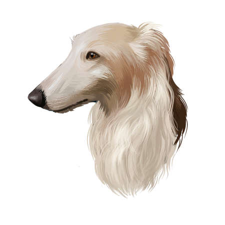 Borzoi, Russian wolfhound, Russian Hunting Sighthound dog digital art illustration isolated on white background. Russian origin hunting dog. Cute pet hand drawn portrait. Graphic clip art design.