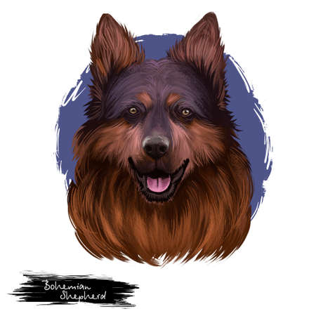 Bohemian Shepherd, Chodsky pes, Chodenhund, Czech Sheepdog, Bohemian Herder dog digital art illustration isolated on white background. Czech Republic origin hunting dog. Cute pet hand drawn portrait. Stock Photo