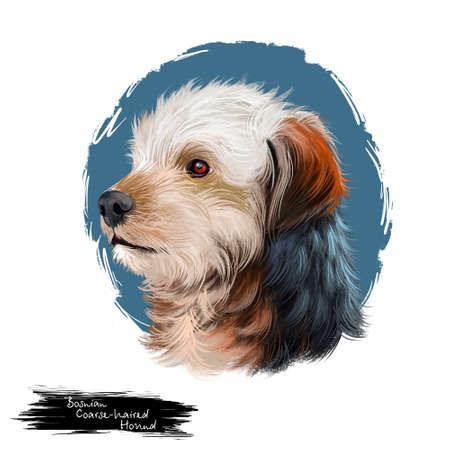 Bosnian Coarse-haired Hound, Barak dog digital art illustration isolated on white background. Bosnia and Herzegovina origin hunting dog. Pet hand drawn portrait. Graphic clip art design for web print.